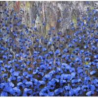 Azul Atardecer